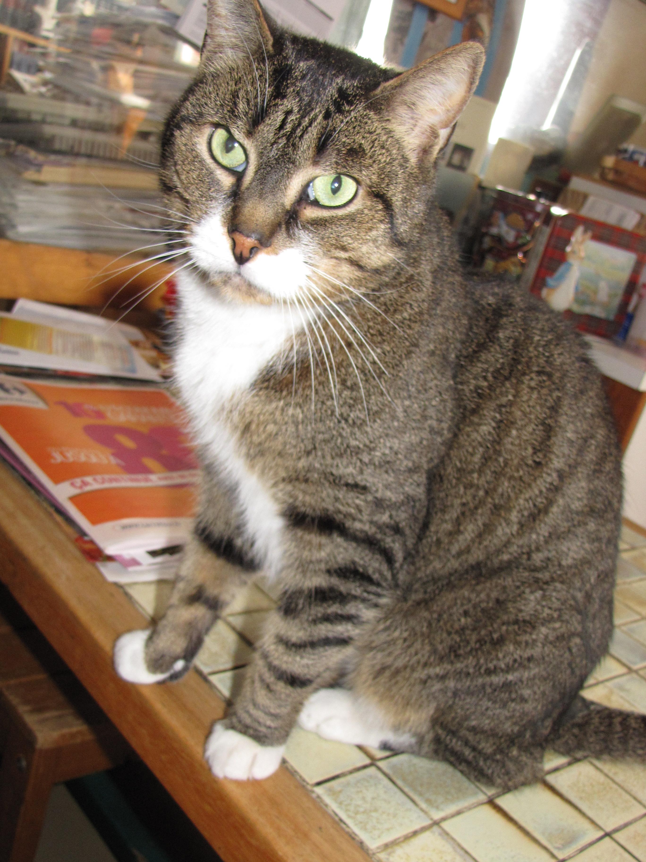 mars2009gromo.jpg
